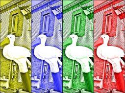 Ooievaars en Weesper vlag in 4 kleuren bij de verloskundige huisartspraktijk dokter Burggraaff Weesp